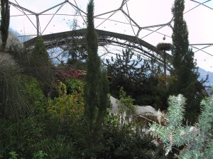 View from within the mediterranean biome